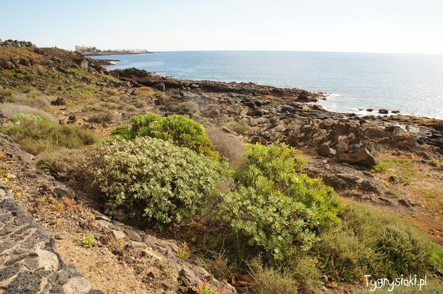 Brzeg oceanu naLanzarote tonietylkonagie skały.