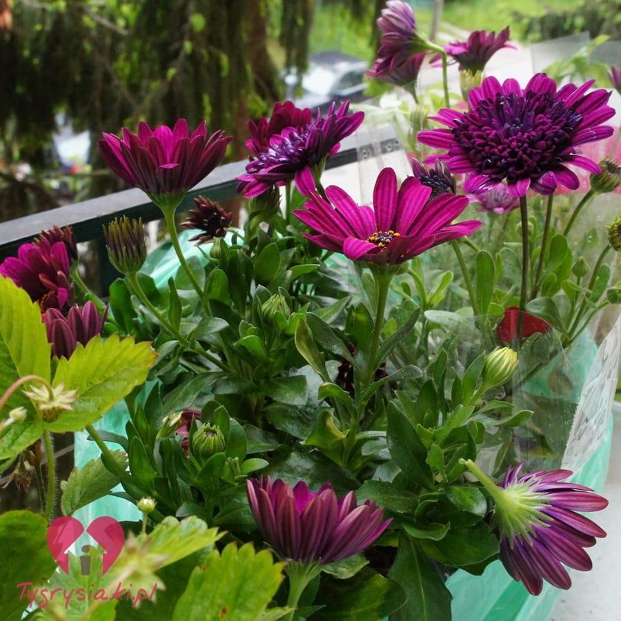 Kwiaty naparapecie
