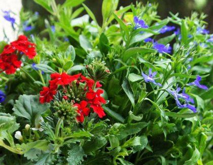 Mali ogrodnicy czyli sadzimy rośliny