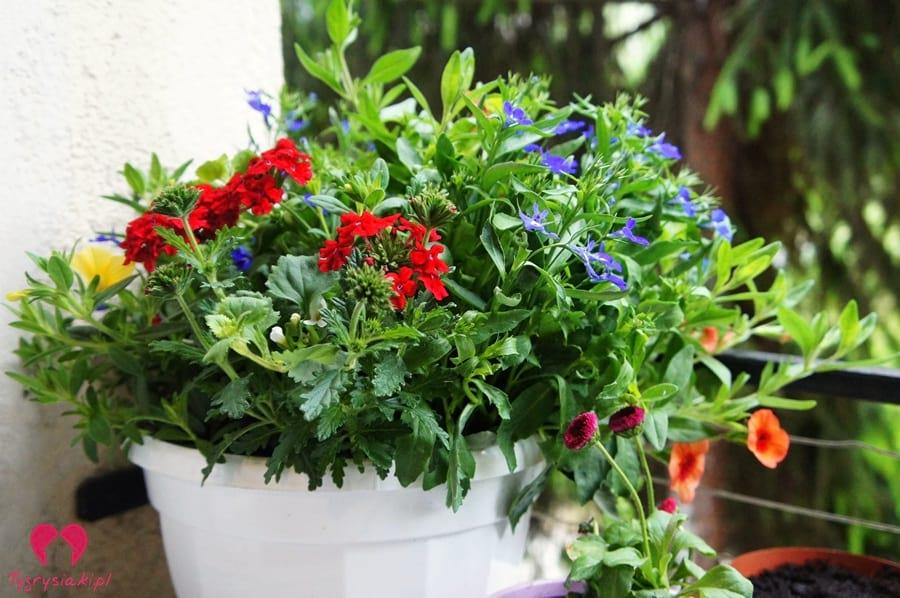 kwiaty zparapetu
