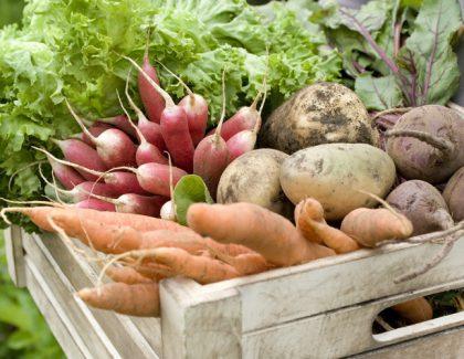 Jak zachęcić dziecko dojedzenia warzyw?