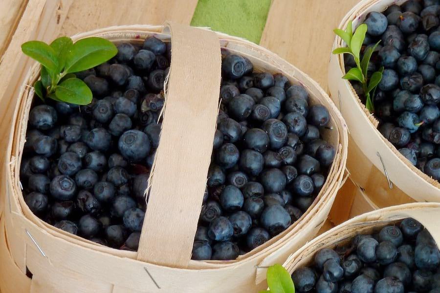 lesne-jagody-odpornosc