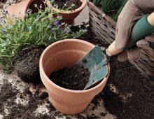 Kwiecień – chorowite lato, lifting ogródka i… chwile grozy!