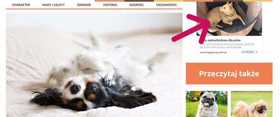 cavalier-pies-fragment-strony-internetowej