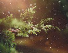 Tygrysiaki nawesoło – wydanie świąteczne