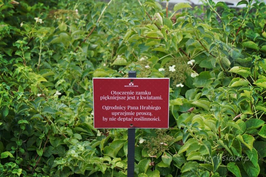 zdjęcie tabliczki zupomnieniem ogrodników pana Hrabiego