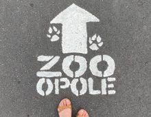 Zoo wOpolu – pomysł nawycieczkę zdzieckiem