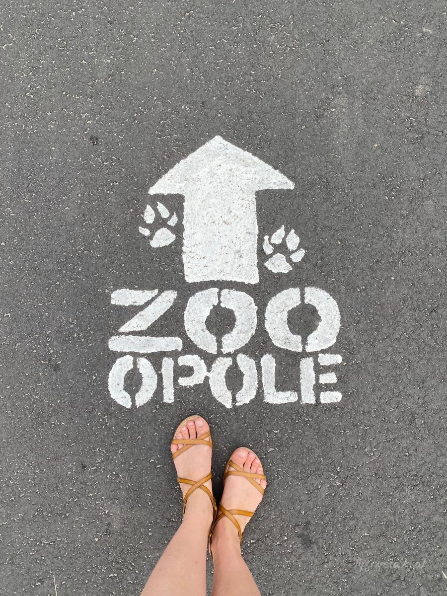 zoo-opole-drogowskaz